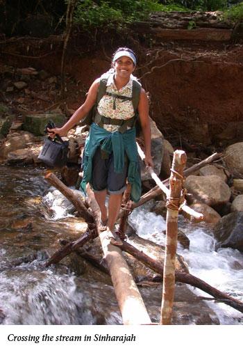 Uromi Goodale, Crossing the stream in Sinharajah