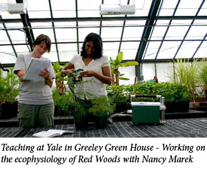Uromi Goodale, Teaching at Yale in Greeley Green House - Working on the ecophysiology of Red Woods with Nancy Marek