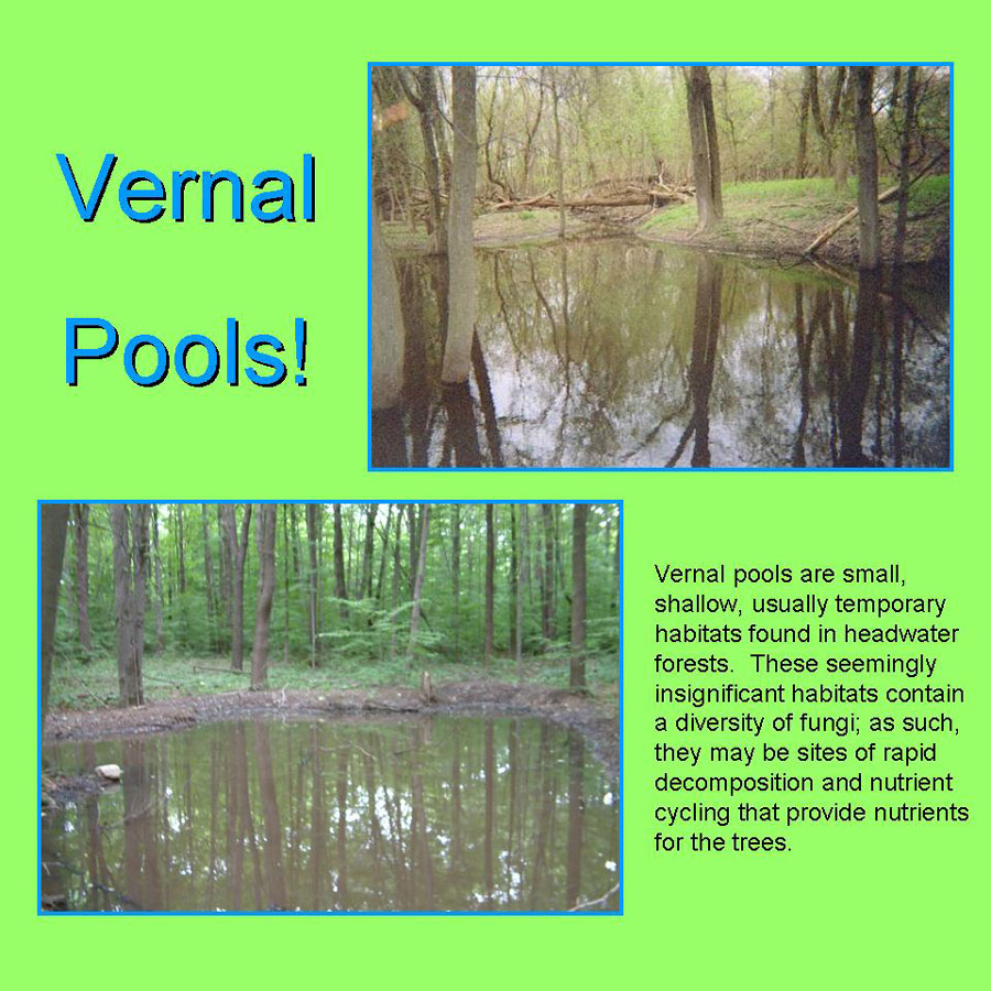 Sarah Kyker, vernal pools
