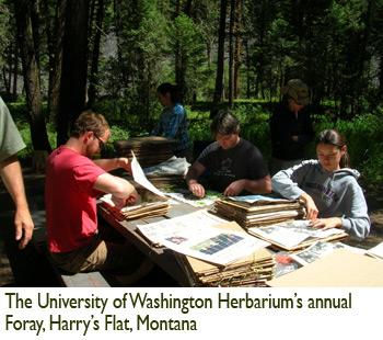 Patricia Lu-Irving, The University of Washington Herbarium's annual Foray, Harry's Flat, Montana